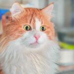 20 Pic & Video Kucing Lucu yang Dapat membuat harimu Menjadi Lebih Bahagia 56