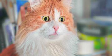 20 Pic & Video Kucing Lucu yang Dapat membuat harimu Menjadi Lebih Bahagia 17