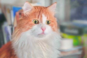 20 Pic & Video Kucing Lucu yang Dapat membuat harimu Menjadi Lebih Bahagia 13