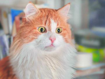 20 Pic & Video Kucing Lucu yang Dapat membuat harimu Menjadi Lebih Bahagia 7