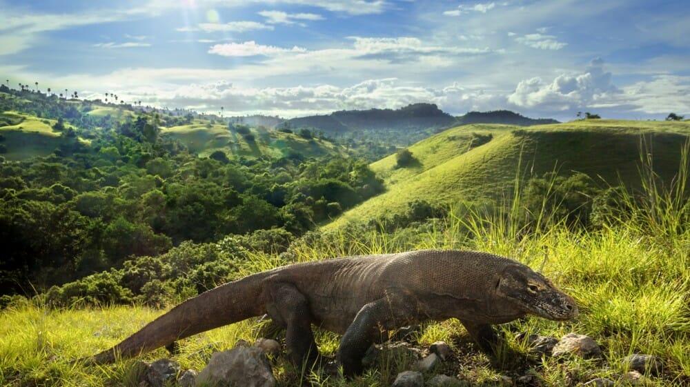 50 Pemandangan Alam Indonesia yang Wajib Traveler Samperin 13