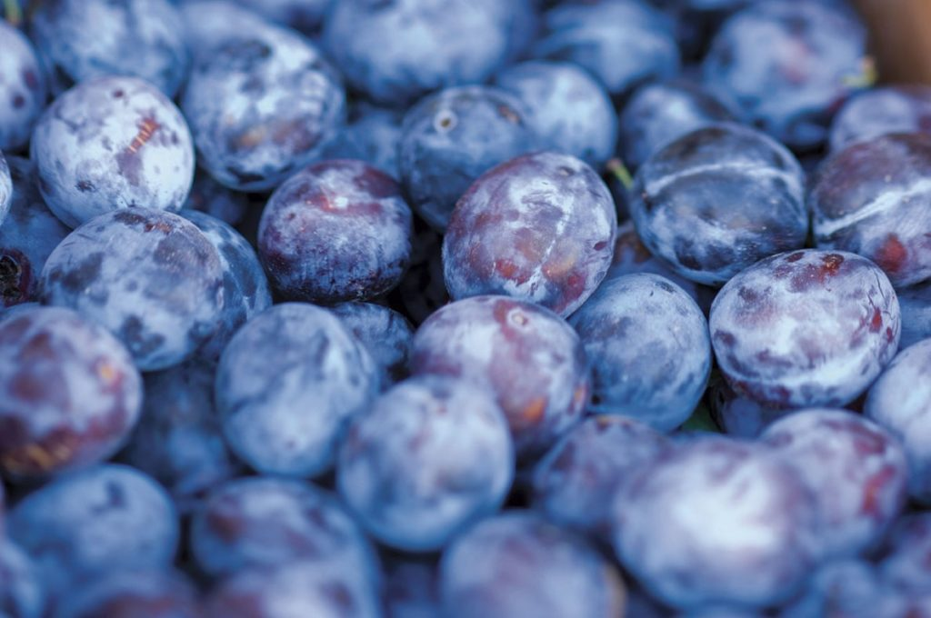 10 Makanan Terbaik Untuk Balita Yang Mudah Disajikan 11