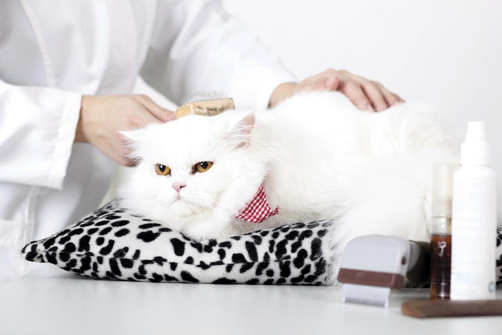 20 Hal yang Wajib Kamu Ketahui Bila Memelihara Kucing 20