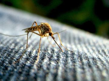 5 Cara Agar Rumah Tidak Menjadi Sarang Nyamuk 5