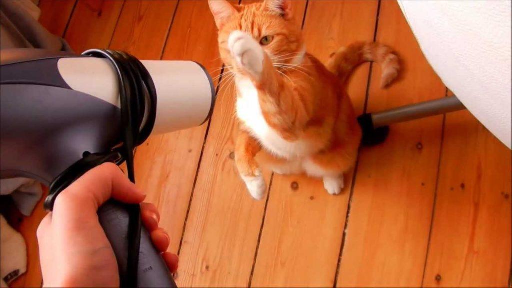 20 Hal yang Wajib Kamu Ketahui Bila Memelihara Kucing 13