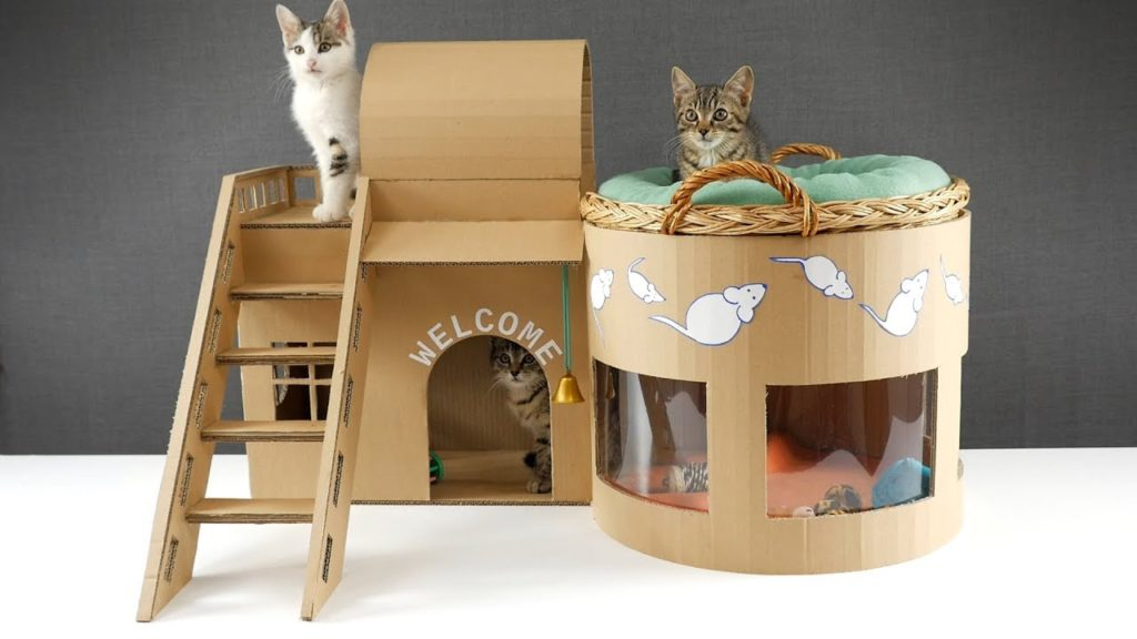 20 Hal yang Wajib Kamu Ketahui Bila Memelihara Kucing 4