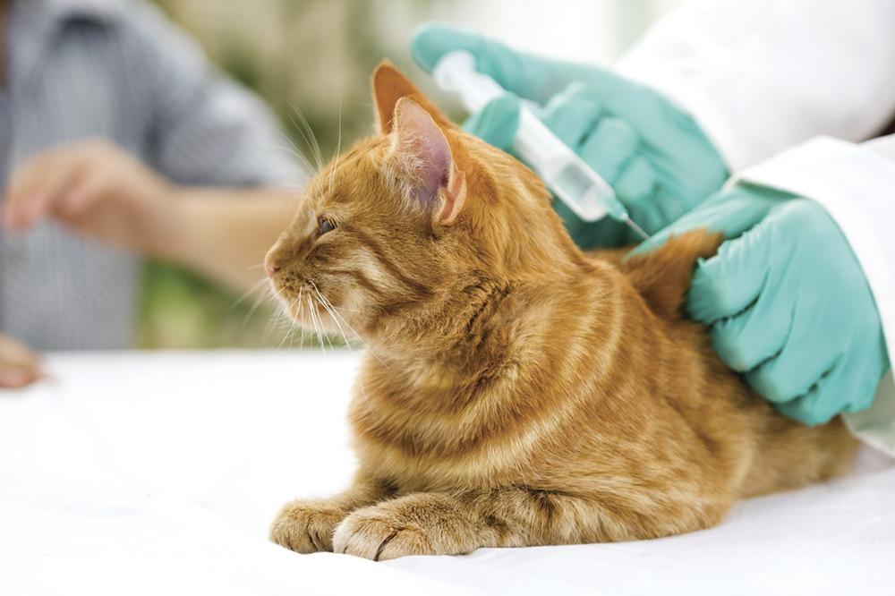 20 Hal yang Wajib Kamu Ketahui Bila Memelihara Kucing 9