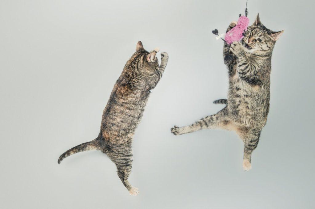 20 Hal yang Wajib Kamu Ketahui Bila Memelihara Kucing 7
