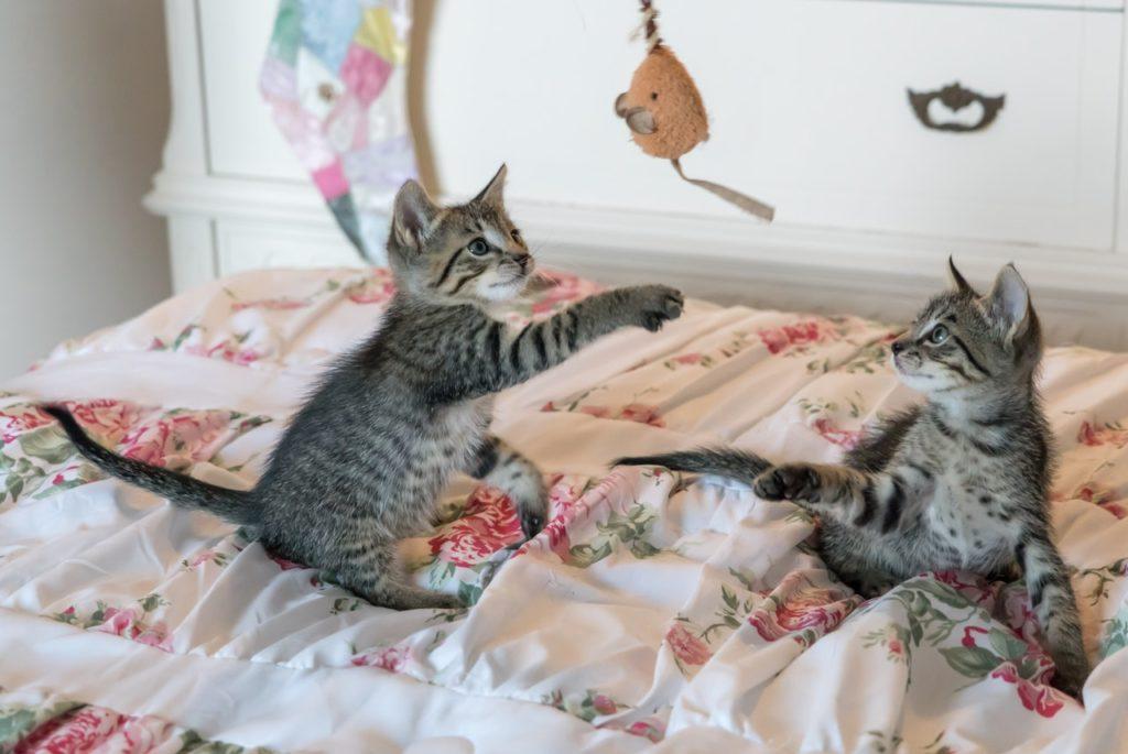 20 Hal yang Wajib Kamu Ketahui Bila Memelihara Kucing 15