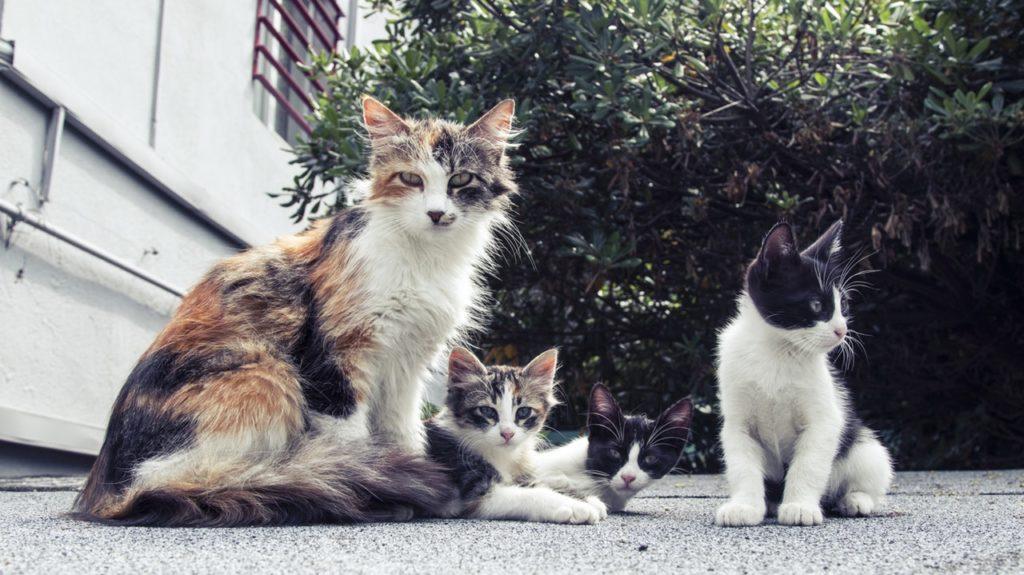 20 Hal yang Wajib Kamu Ketahui Bila Memelihara Kucing 1
