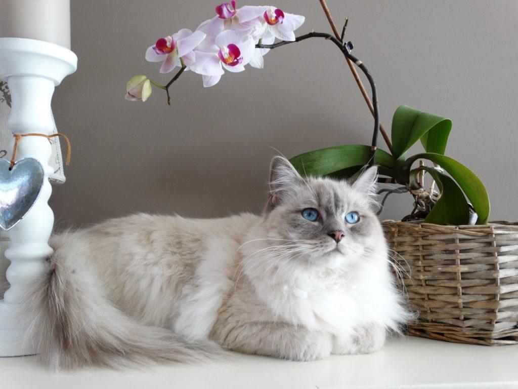 20 Hal yang Wajib Kamu Ketahui Bila Memelihara Kucing 19