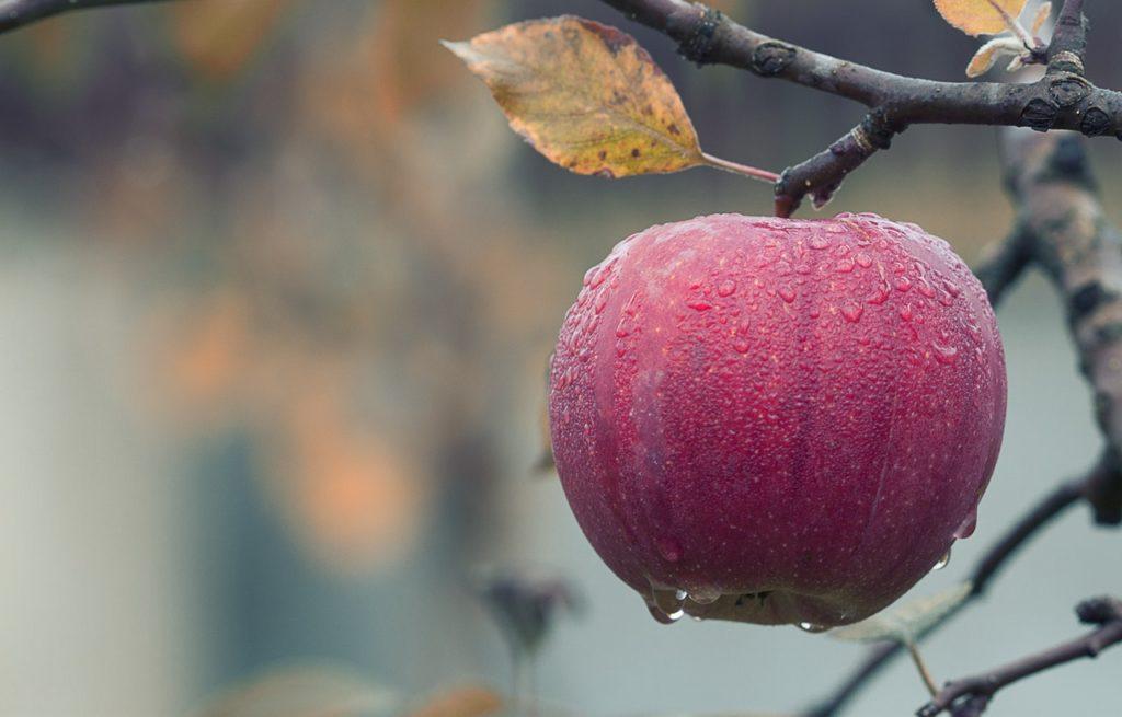 5 Buah & Sayur Yang Melambangkan Cinta 3