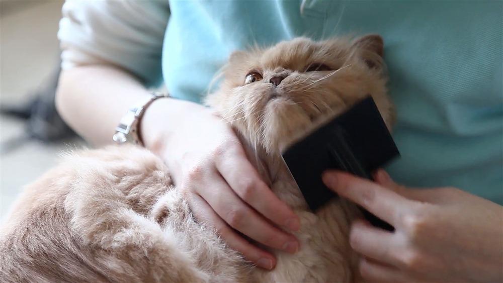 20 Hal yang Wajib Kamu Ketahui Bila Memelihara Kucing 12