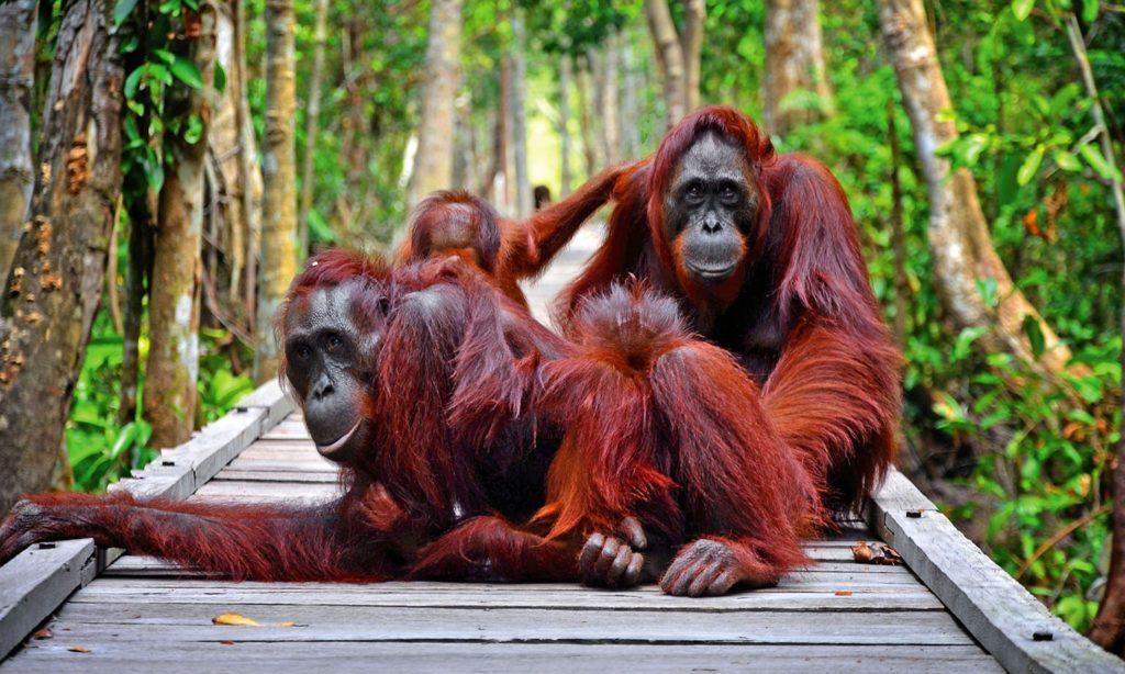 50 Pemandangan Alam Indonesia yang Wajib Traveler Samperin 18