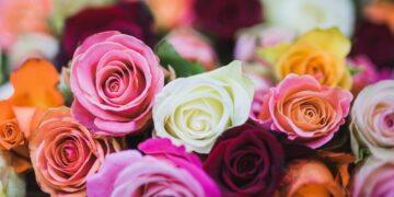 5 Arti Bunga Mawar Berdasarkan Warna 22