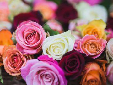 5 Arti Bunga Mawar Berdasarkan Warna 13