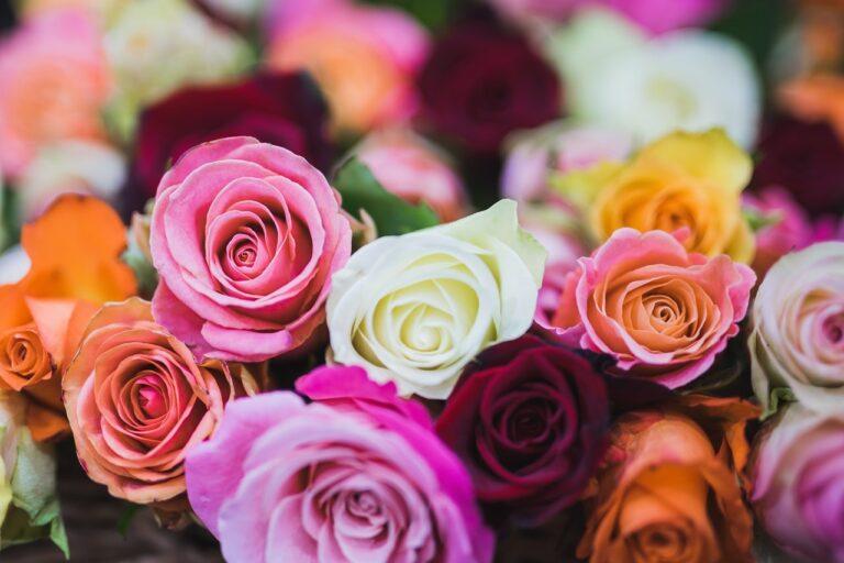 5 Arti Bunga Mawar Berdasarkan Warna 1