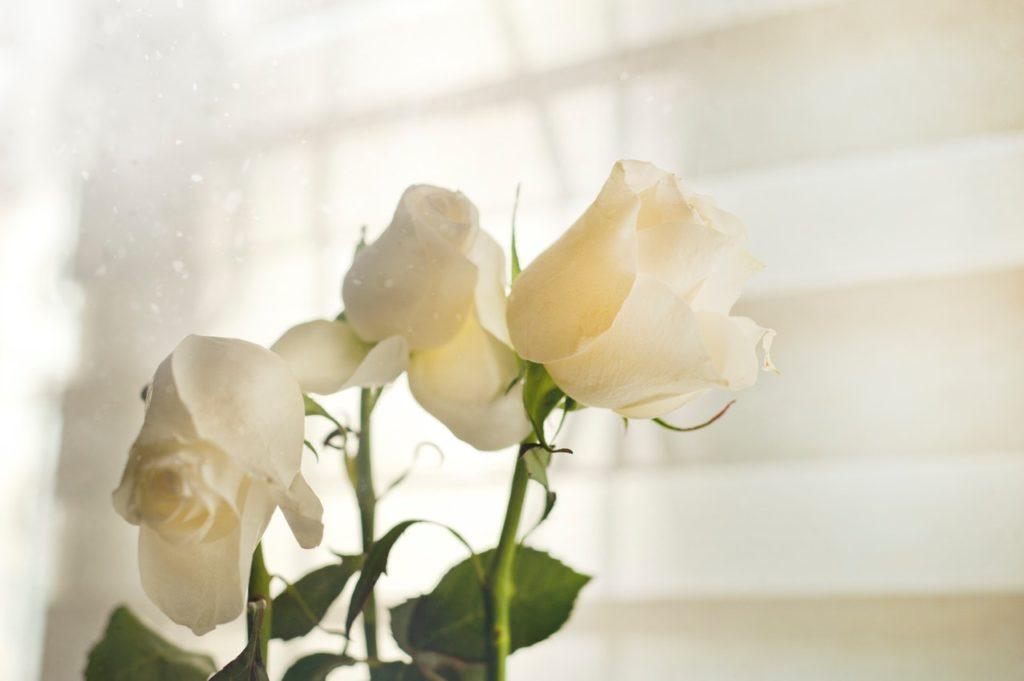 5 Arti Bunga Mawar Berdasarkan Warna 3