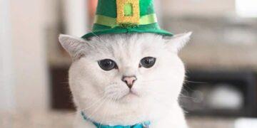 5 Kucing Terkenal Yang Follower Instagram nya Mengalahkan Selebritis 14
