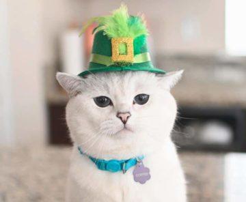5 Kucing Terkenal Yang Follower Instagram nya Mengalahkan Selebritis 22