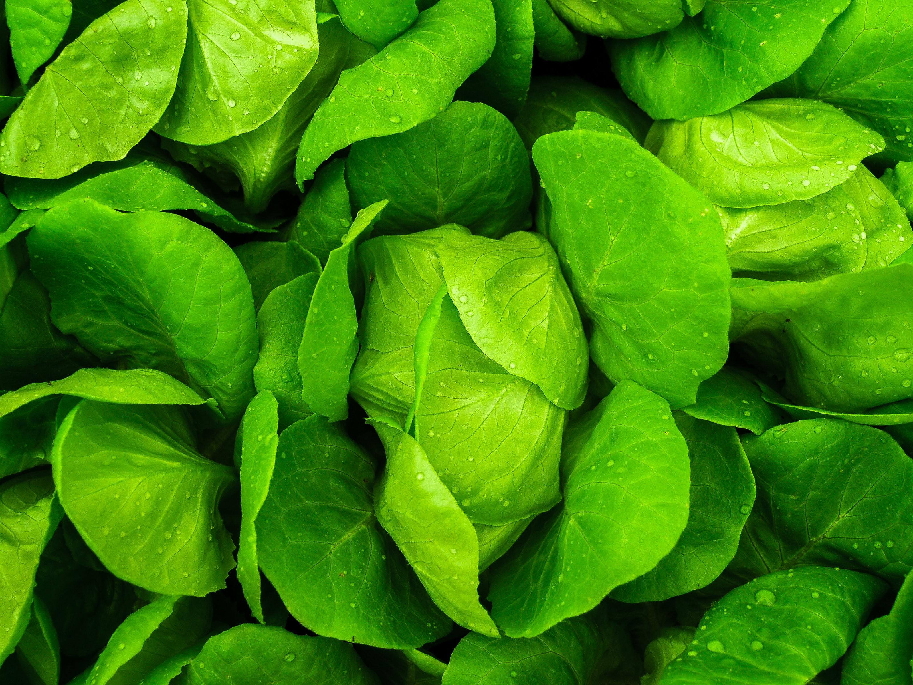 Vegetarian Harus Melakukan ini Agar Sayuranmu Tetap Segar dan Tahan Lama 5