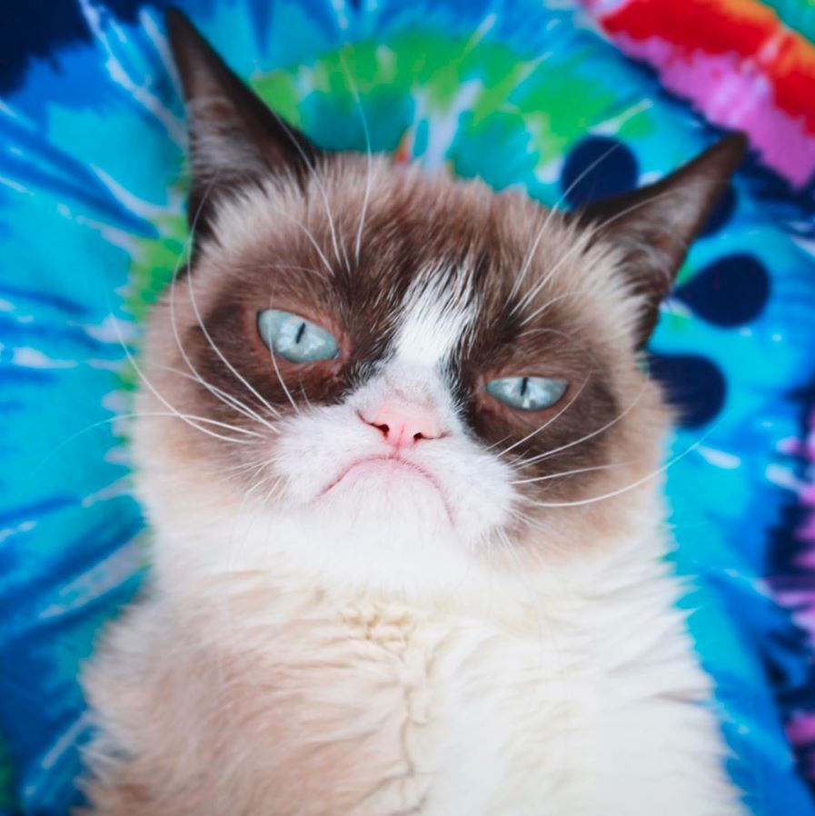 5 Kucing Terkenal Yang Follower Instagram nya Mengalahkan Selebritis 4