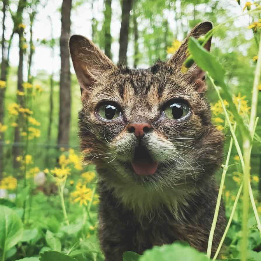 5 Kucing Terkenal Yang Follower Instagram nya Mengalahkan Selebritis 5