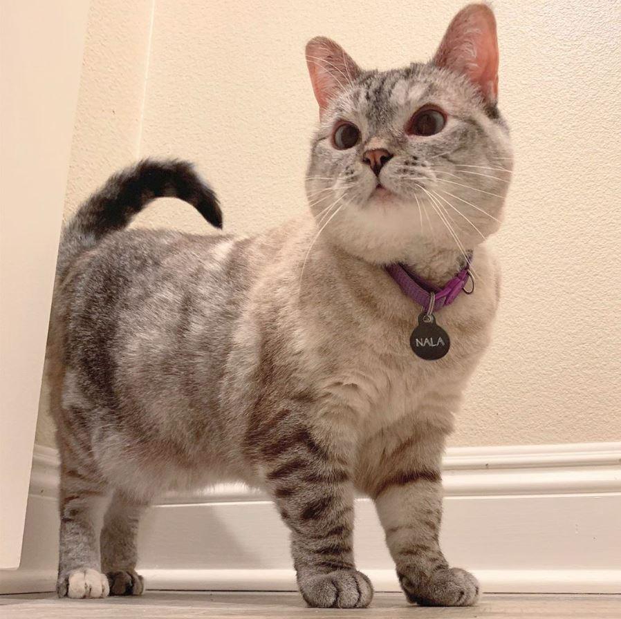 5 Kucing Terkenal Yang Follower Instagram nya Mengalahkan Selebritis 3