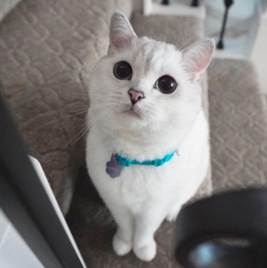 5 Kucing Terkenal Yang Follower Instagram nya Mengalahkan Selebritis 6