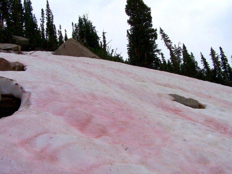 Fenomena Salju Berwarna Pink Yang Bisa Kamu Temukan di Tempat Ini 1