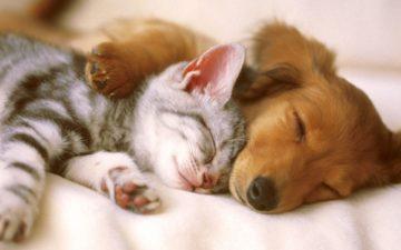 Perlu Diperhatikan, Jangan Memberi Makanan Vegan Ke Anjing dan Kucing Milikmu 25