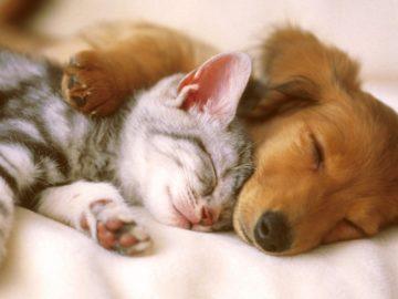 Perlu Diperhatikan, Jangan Memberi Makanan Vegan Ke Anjing dan Kucing Milikmu 10