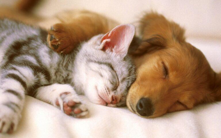 Perlu Diperhatikan, Jangan Memberi Makanan Vegan Ke Anjing dan Kucing Milikmu 1