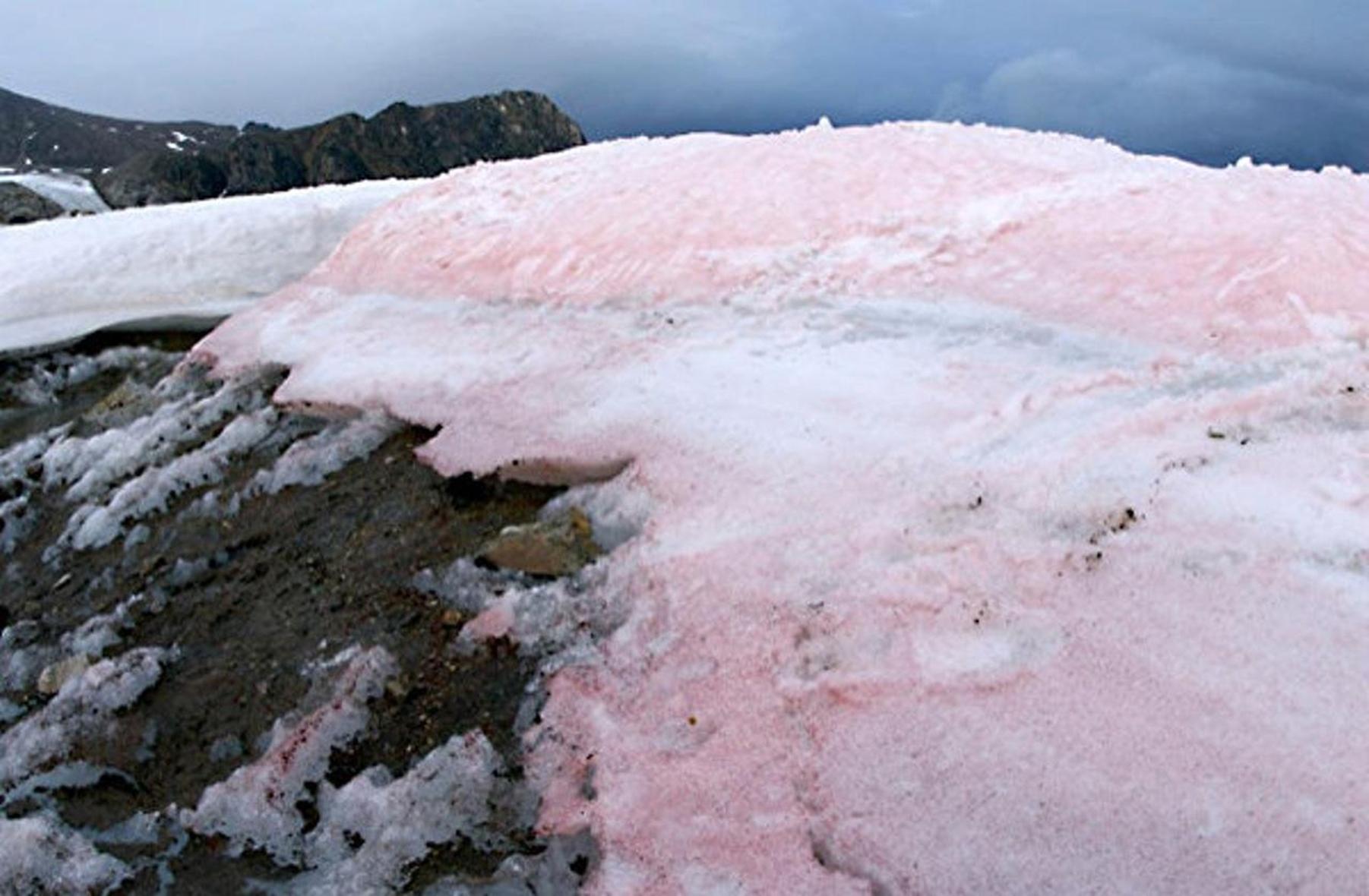 Fenomena Salju Berwarna Pink Yang Bisa Kamu Temukan di Tempat Ini 3