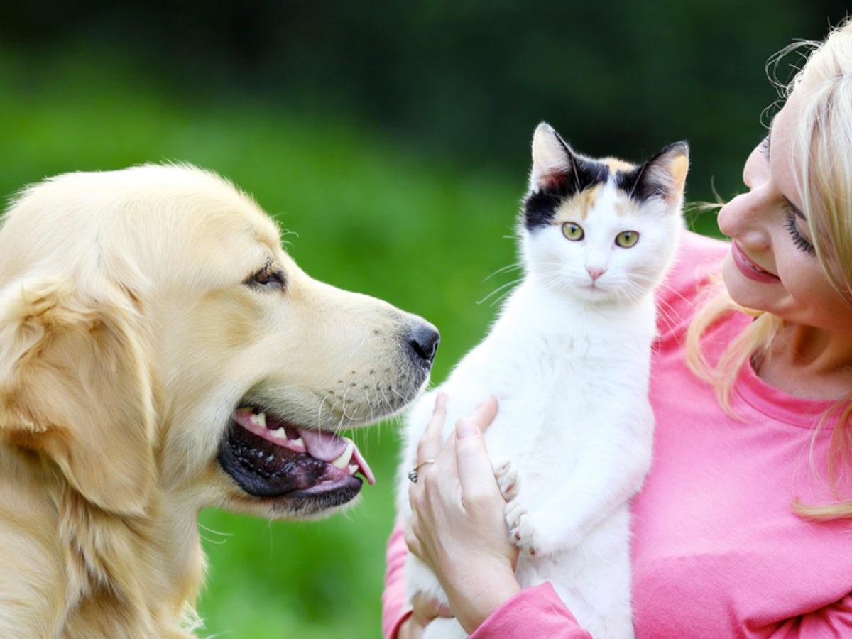 Perlu Diperhatikan, Jangan Memberi Makanan Vegan Ke Anjing dan Kucing Milikmu 3