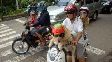 5 Hal Yang Menandakan Bahwa Kamu Masih di Indonesia 13