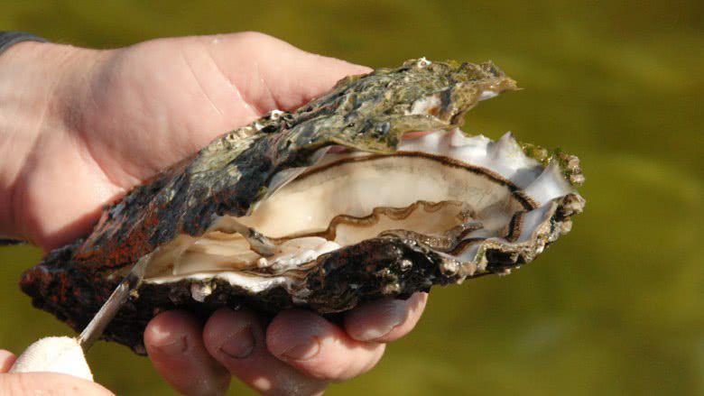 5 Seafood Dengan Harga Termahal di Dunia 6