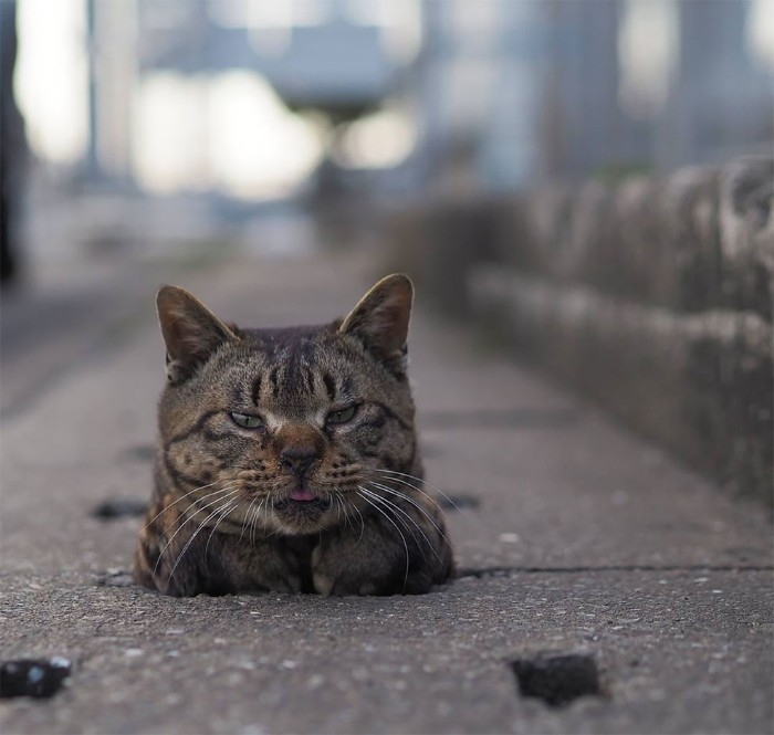 Fotografer Jepang Berhasil Mengabadikan Kucing Liar yang Merubah Trotoar Menjadi Rumah & Tempat Bermain Bagi Mereka 3