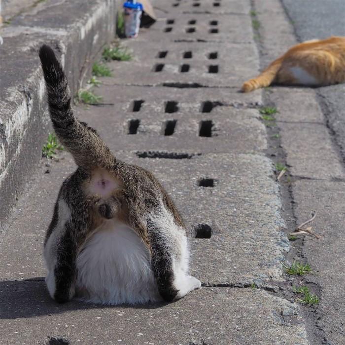 Fotografer Jepang Berhasil Mengabadikan Kucing Liar yang Merubah Trotoar Menjadi Rumah & Tempat Bermain Bagi Mereka 9