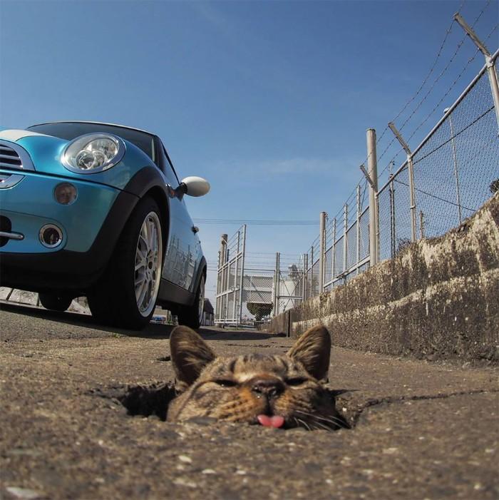 Fotografer Jepang Berhasil Mengabadikan Kucing Liar yang Merubah Trotoar Menjadi Rumah & Tempat Bermain Bagi Mereka 12