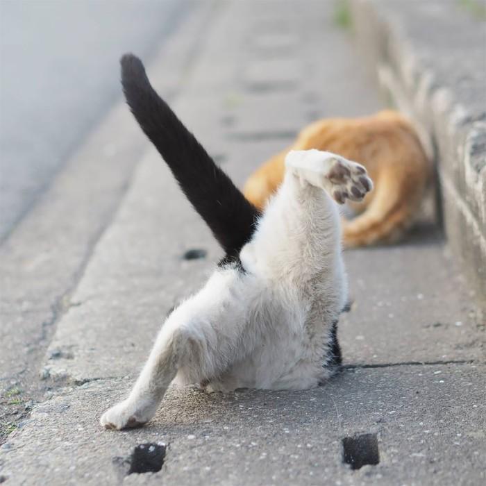 Fotografer Jepang Berhasil Mengabadikan Kucing Liar yang Merubah Trotoar Menjadi Rumah & Tempat Bermain Bagi Mereka 10