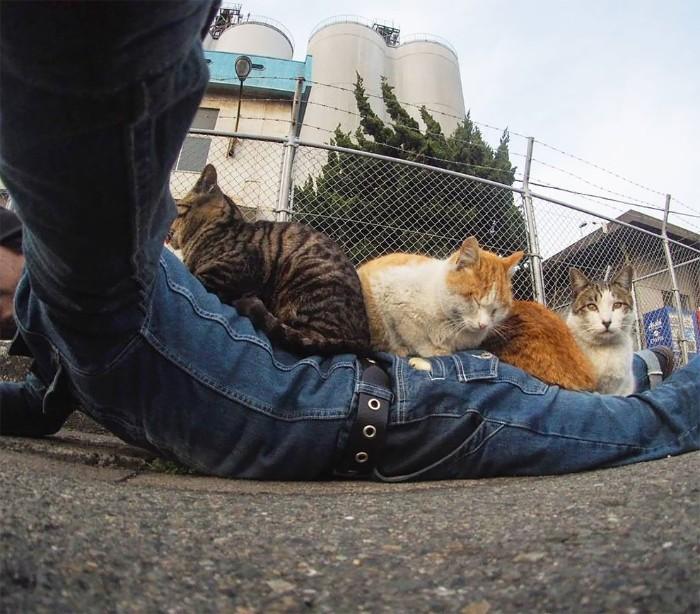 Fotografer Jepang Berhasil Mengabadikan Kucing Liar yang Merubah Trotoar Menjadi Rumah & Tempat Bermain Bagi Mereka 16