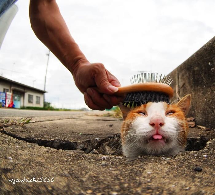 Fotografer Jepang Berhasil Mengabadikan Kucing Liar yang Merubah Trotoar Menjadi Rumah & Tempat Bermain Bagi Mereka 15