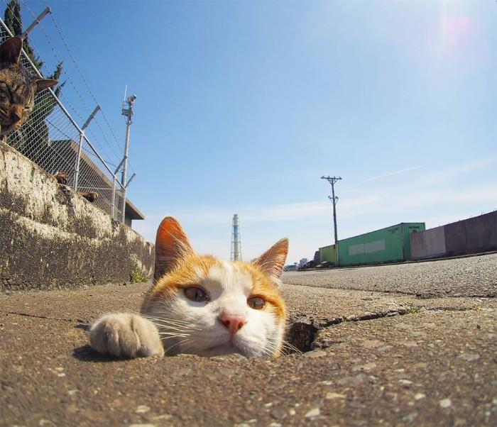 Fotografer Jepang Berhasil Mengabadikan Kucing Liar yang Merubah Trotoar Menjadi Rumah & Tempat Bermain Bagi Mereka 17