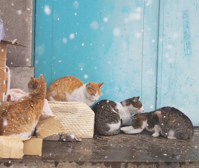 Fotografer Jepang Berhasil Mengabadikan Kucing Liar yang Merubah Trotoar Menjadi Rumah & Tempat Bermain Bagi Mereka 21