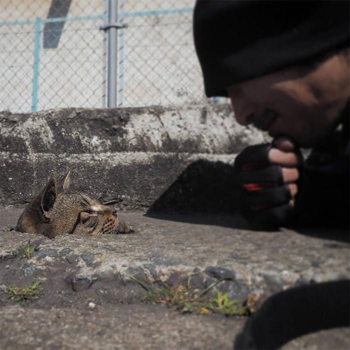 Fotografer Jepang Berhasil Mengabadikan Kucing Liar yang Merubah Trotoar Menjadi Rumah & Tempat Bermain Bagi Mereka 4