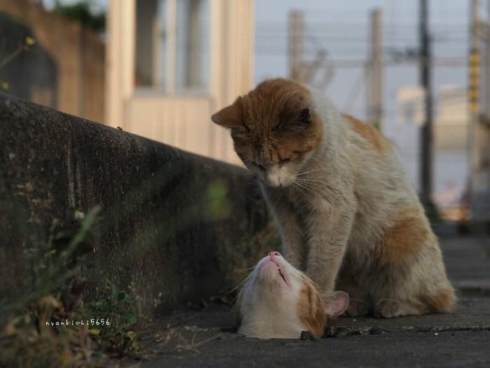 Fotografer Jepang Berhasil Mengabadikan Kucing Liar yang Merubah Trotoar Menjadi Rumah & Tempat Bermain Bagi Mereka 18