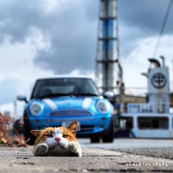 Fotografer Jepang Berhasil Mengabadikan Kucing Liar yang Merubah Trotoar Menjadi Rumah & Tempat Bermain Bagi Mereka 20