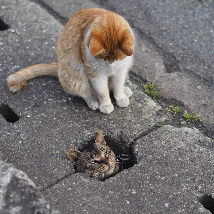 Fotografer Jepang Berhasil Mengabadikan Kucing Liar yang Merubah Trotoar Menjadi Rumah & Tempat Bermain Bagi Mereka 19