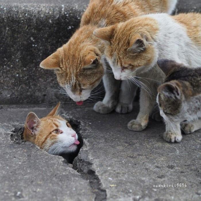 Fotografer Jepang Berhasil Mengabadikan Kucing Liar yang Merubah Trotoar Menjadi Rumah & Tempat Bermain Bagi Mereka 6